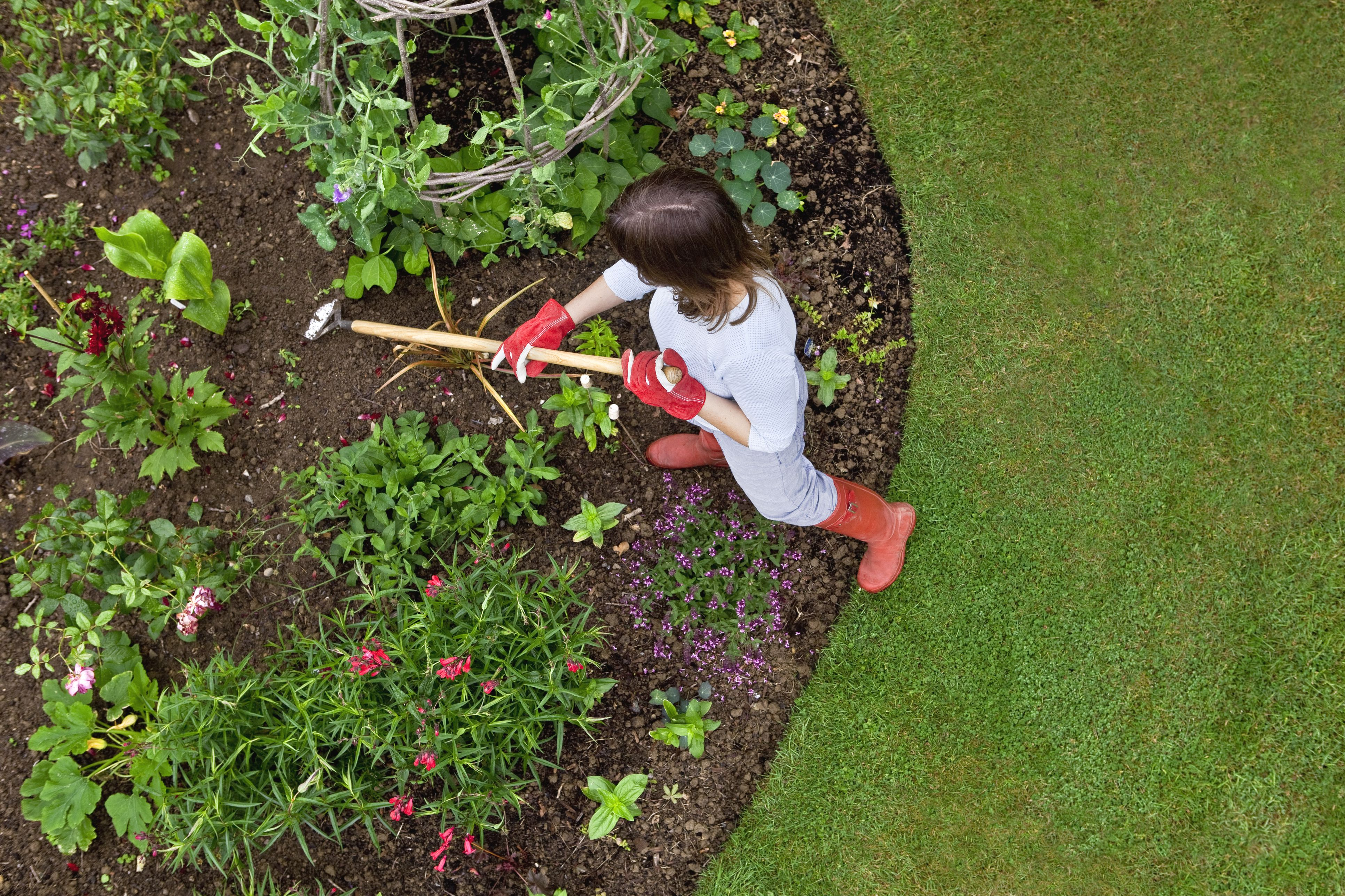Woman weeding a flower bed with a hoe
