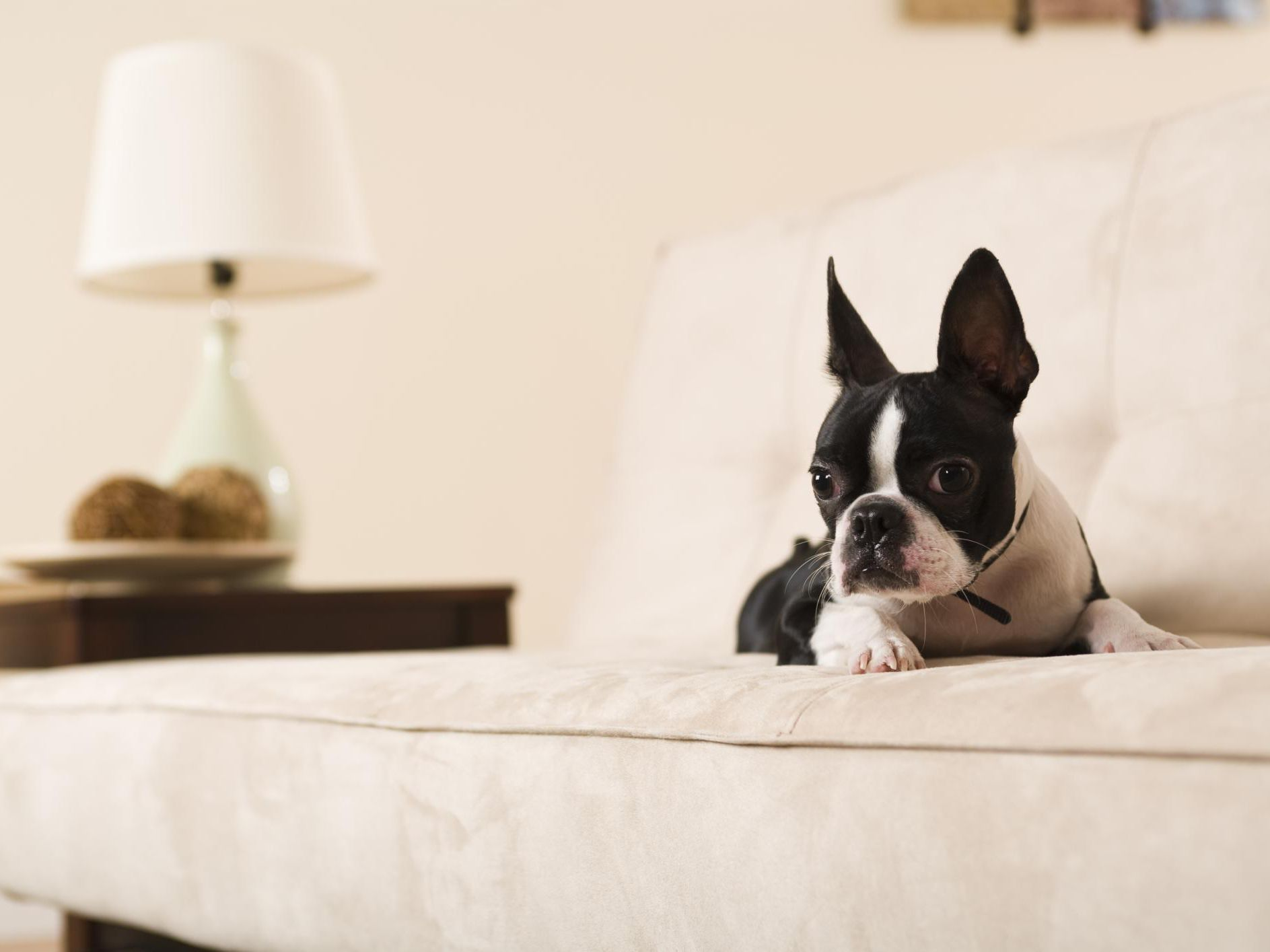 Admirable Couch Upholstery Choices For Cat And Dog Owners Machost Co Dining Chair Design Ideas Machostcouk
