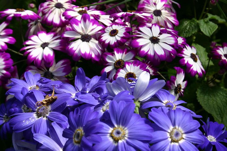 Daisy like flowers in shades of white and purple, and periwinkle blue.