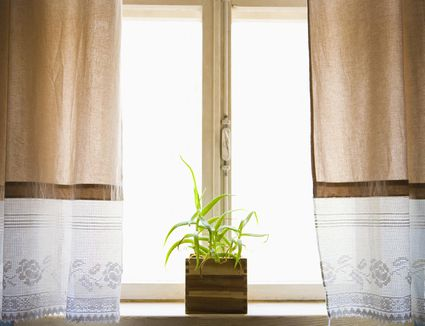 how to grow rhodiola rosea indoors