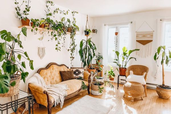 Boho chic living room filled with plants
