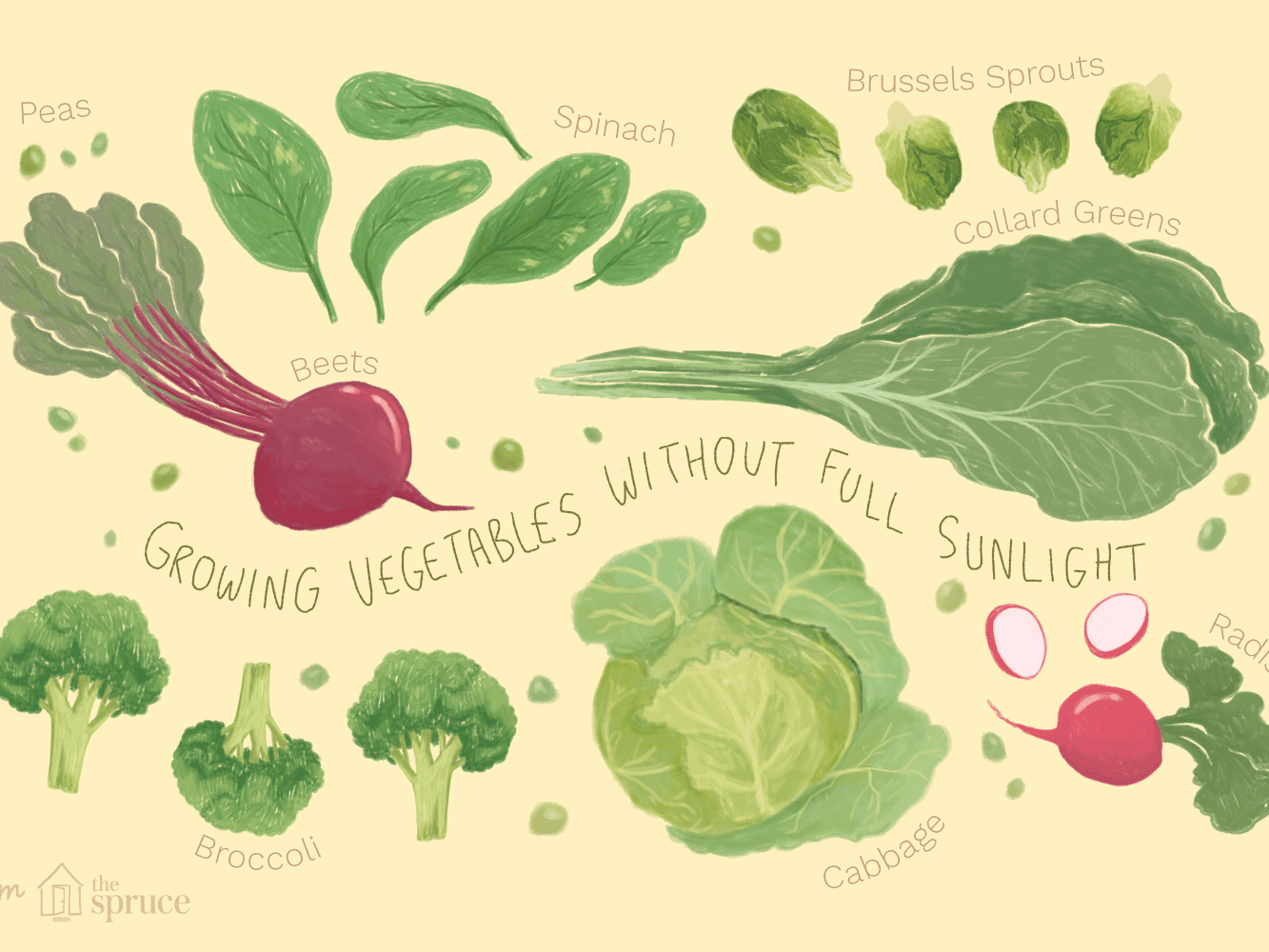 16 Vegetables You Can Grow In Partial Shade