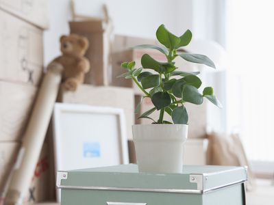 Piled cardboard boxes with a potted plant in the foreground