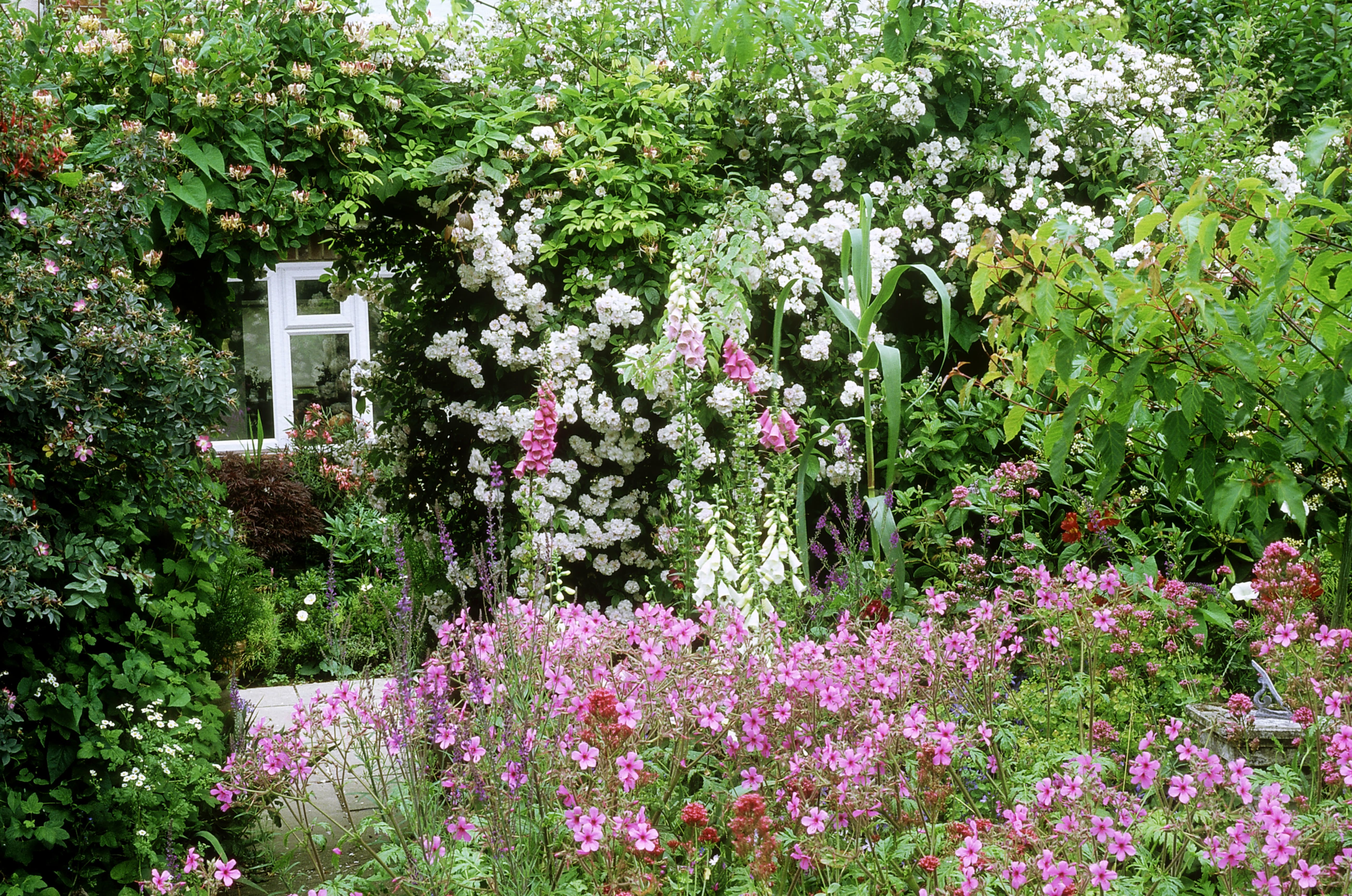 Plants For A Traditional Cottage Garden