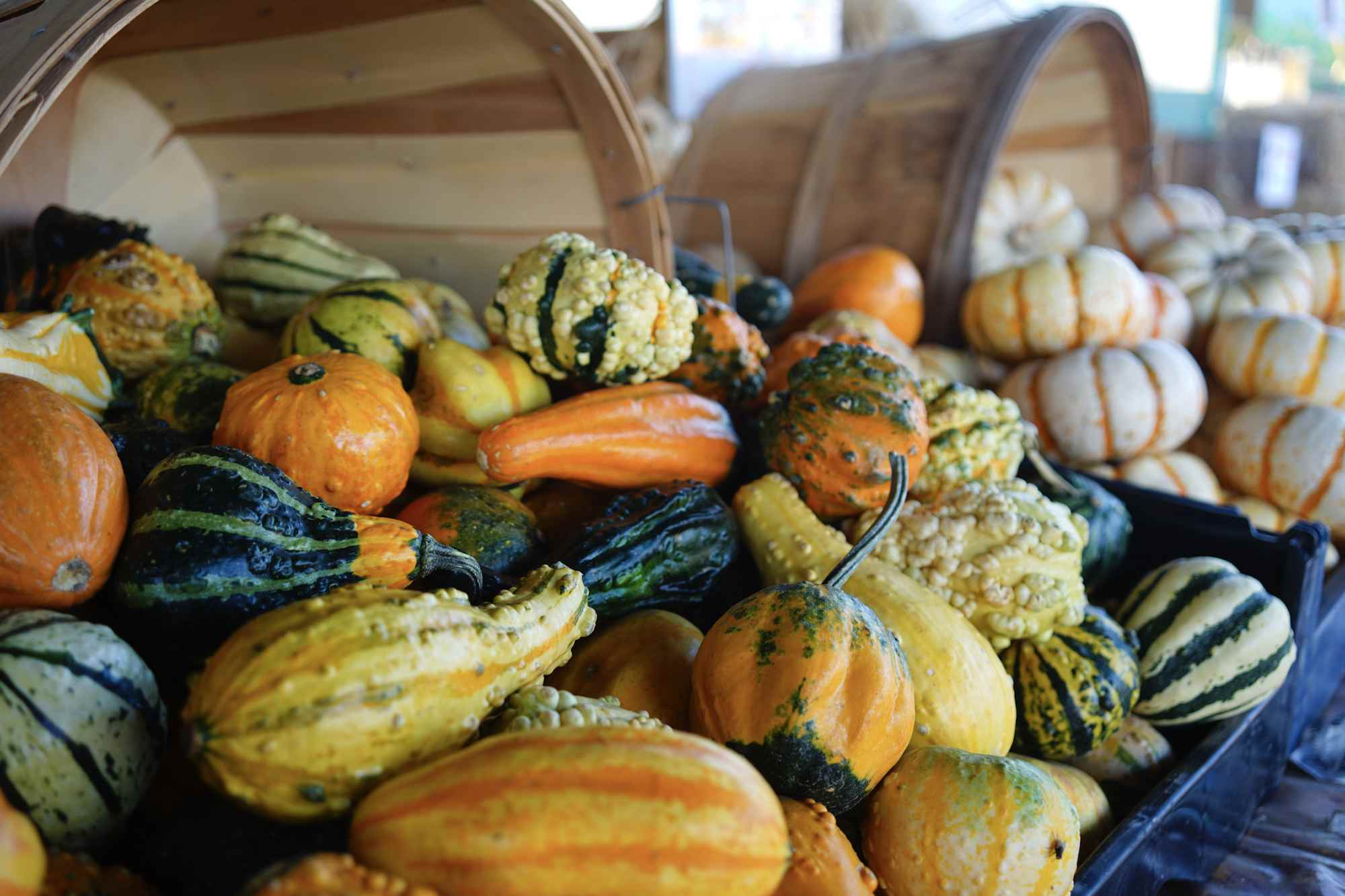 How To Harvest And Dry Ornamental Gourds
