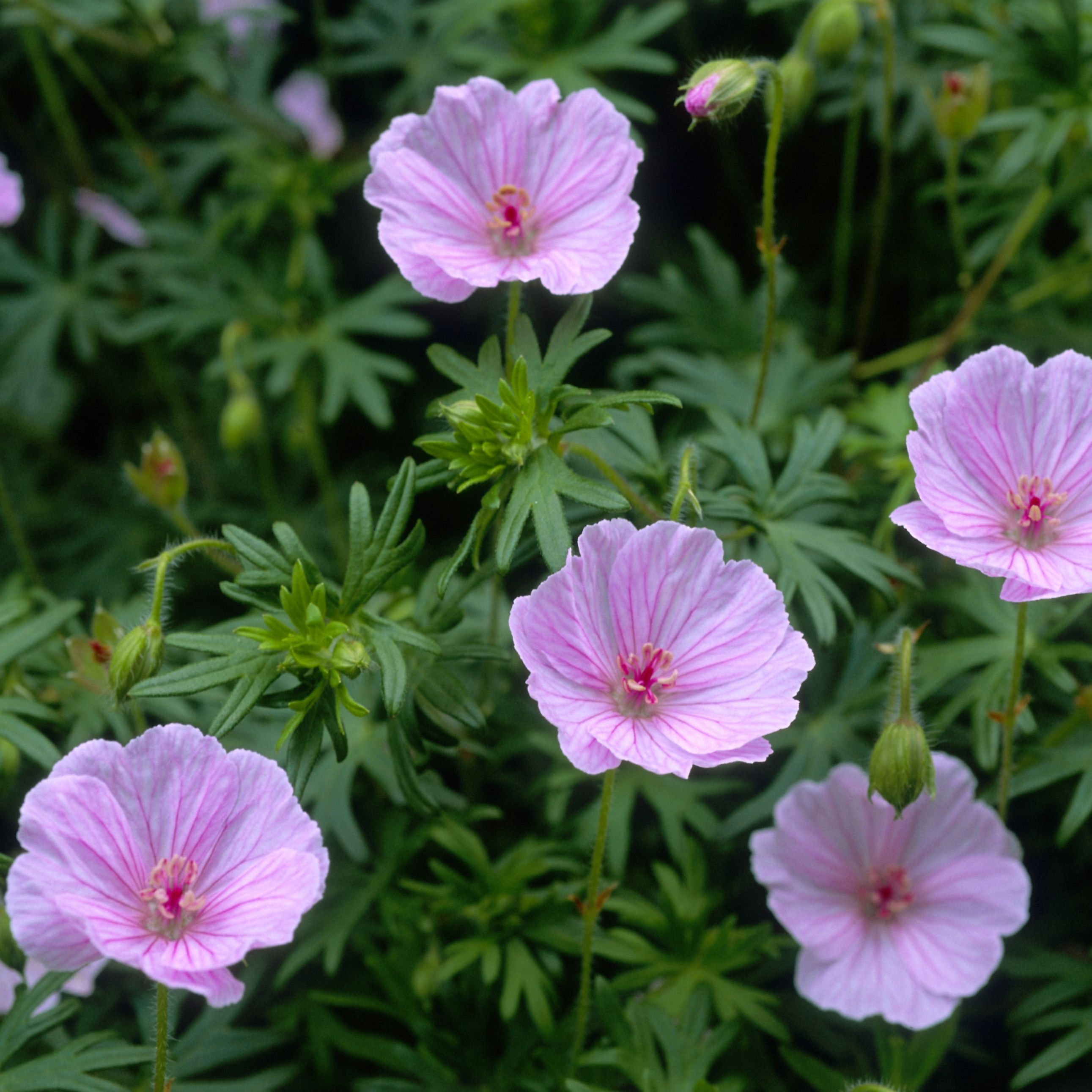7 Flowers That Naturally Repel Insects
