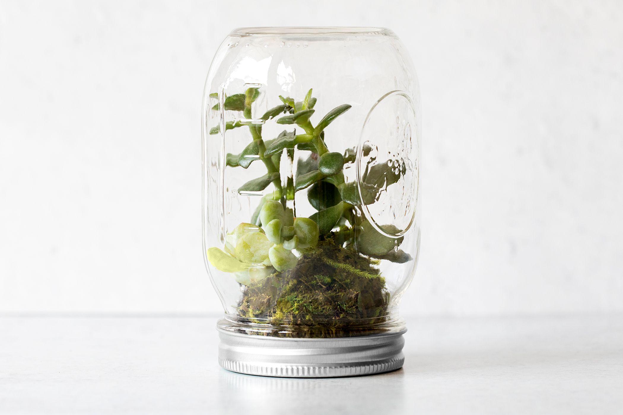 How To Make A Mason Jar Terrarium