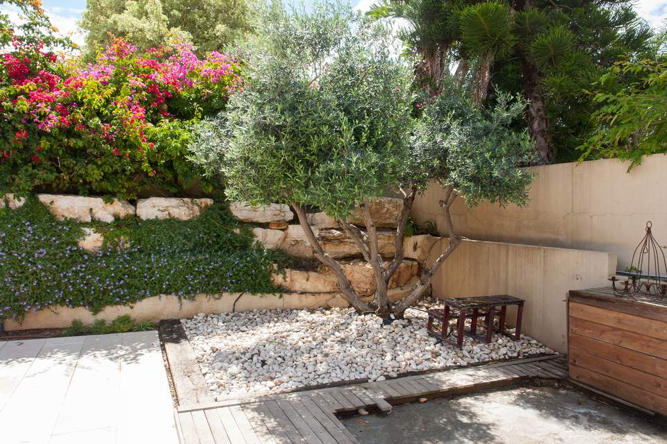 Fruitless Olive Tree