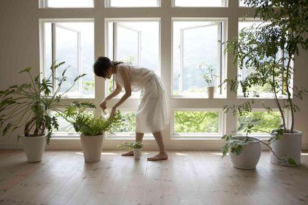 Good And Bad Feng Shui Plants