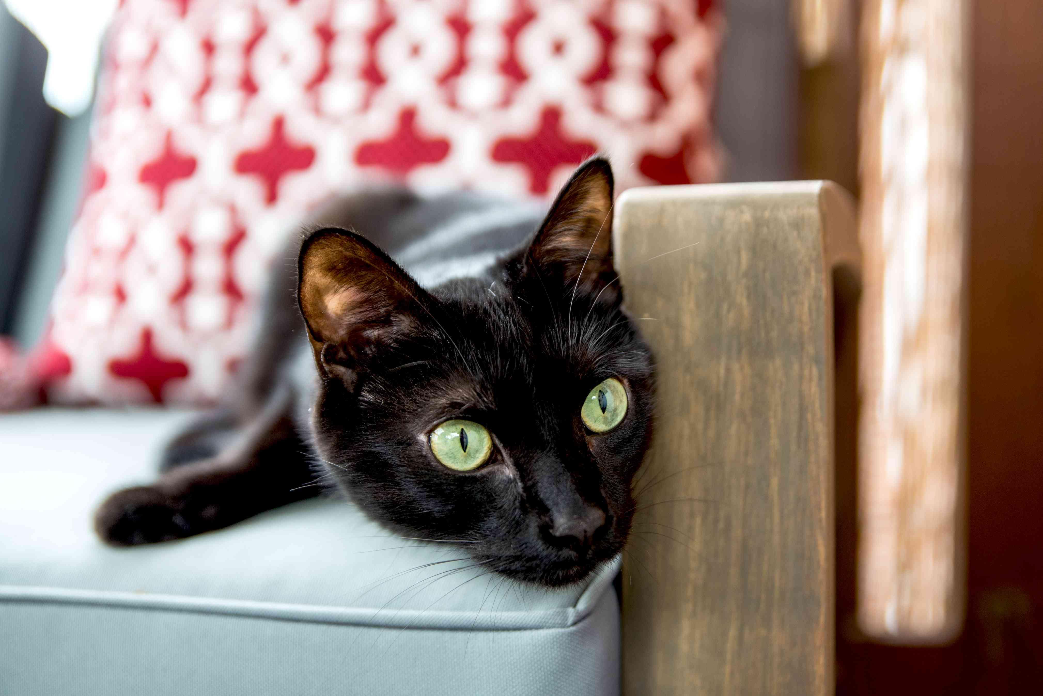 kitty on a canvas chair