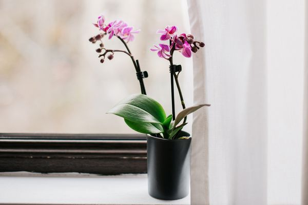 orchids growing by the window