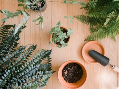 various ferns and gardening tools