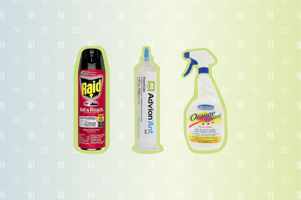 Ant Killer Sprays