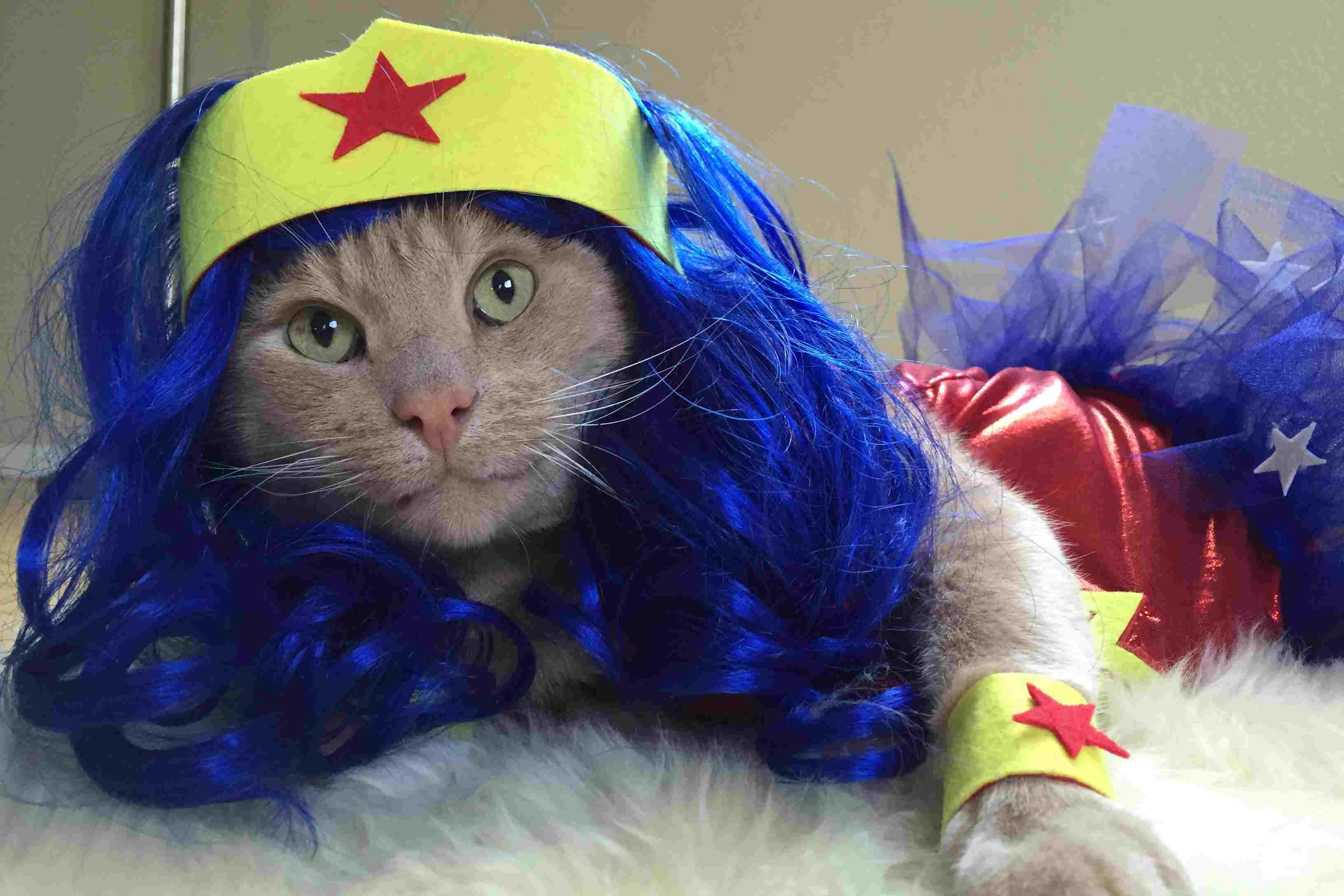 wonder-woman-cat