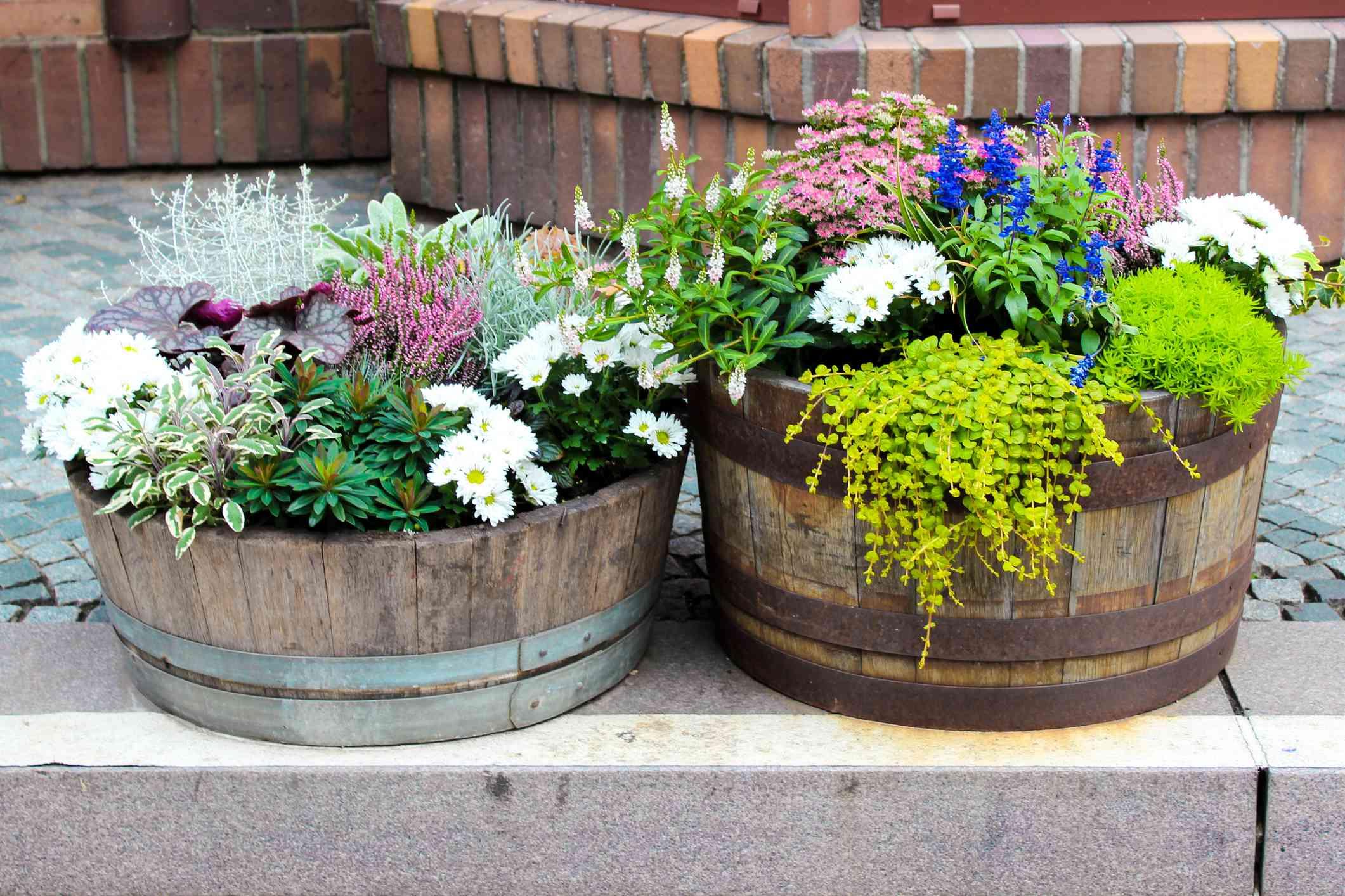 Plantas que crecen en contenedores