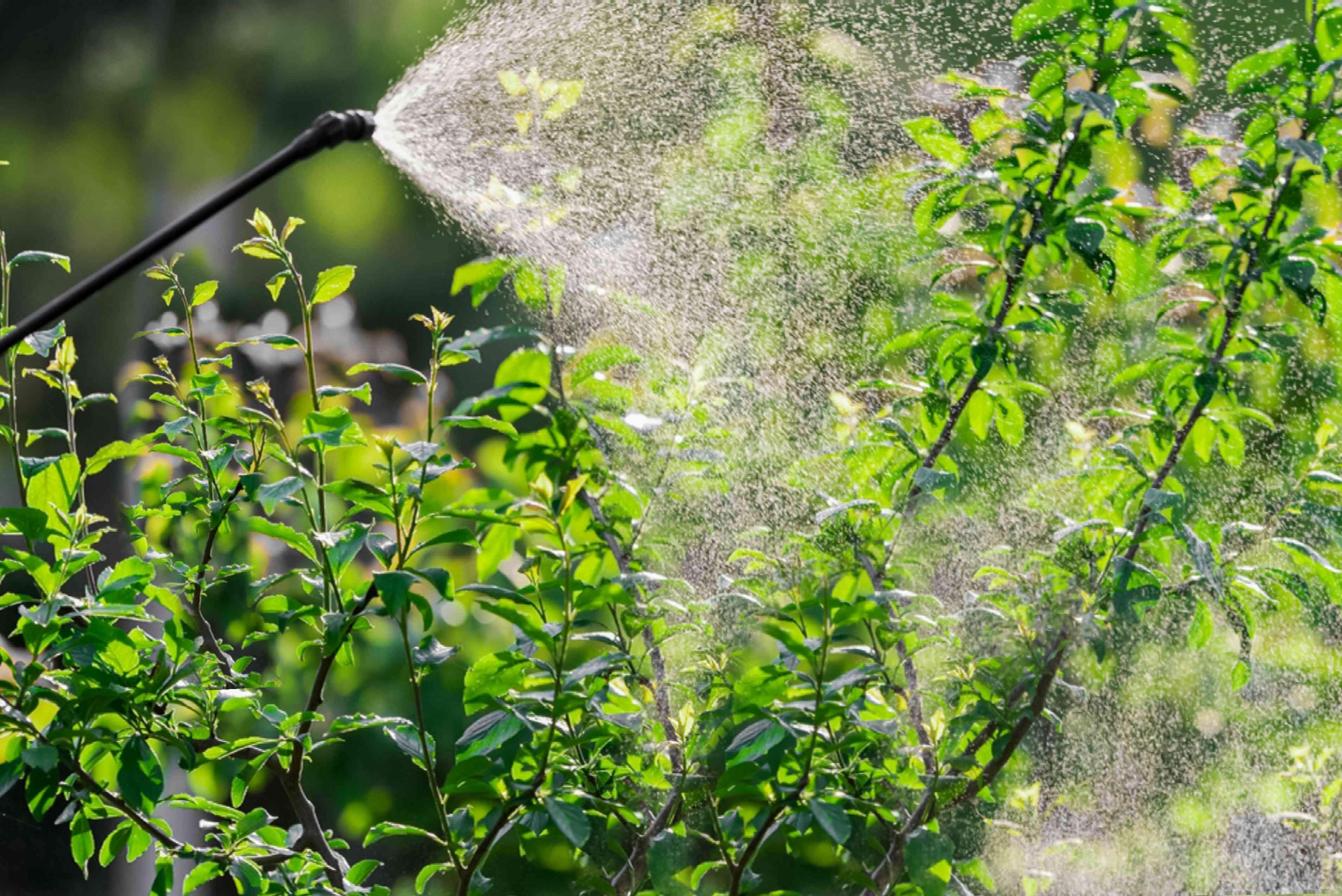 dormant oil for leaf galls