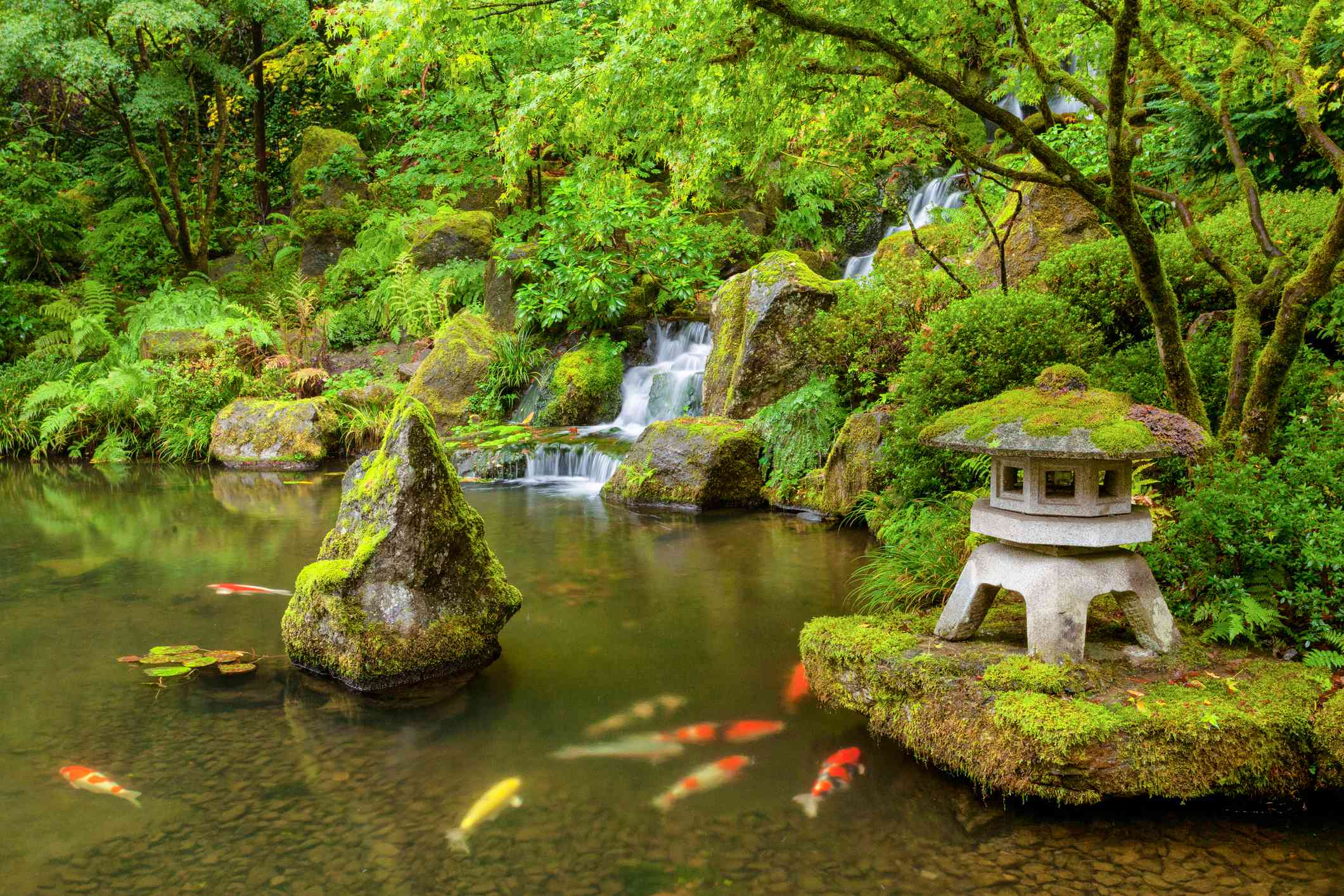 A green koi pond with waterfalls, boulders and sculptures.