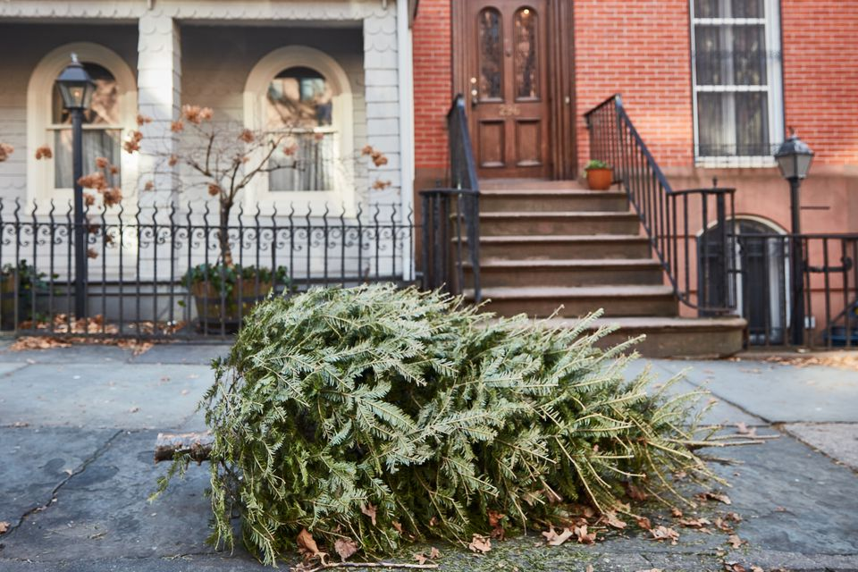 a Christmas tree discarded on the sidewalk