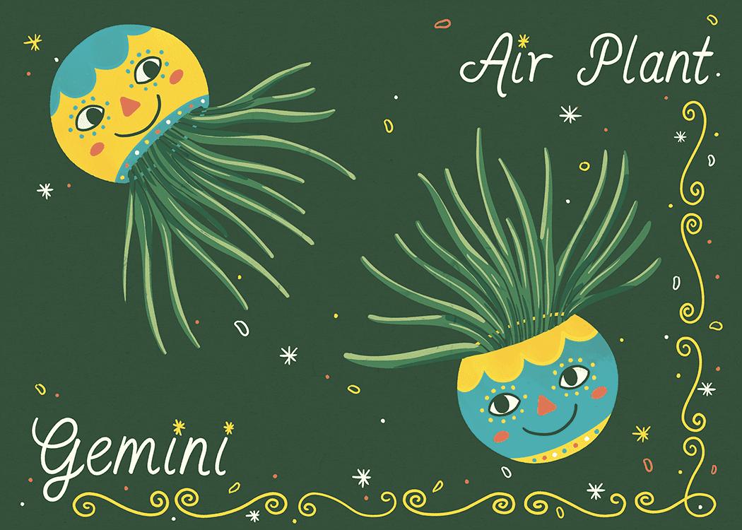 gemini air plant illustration