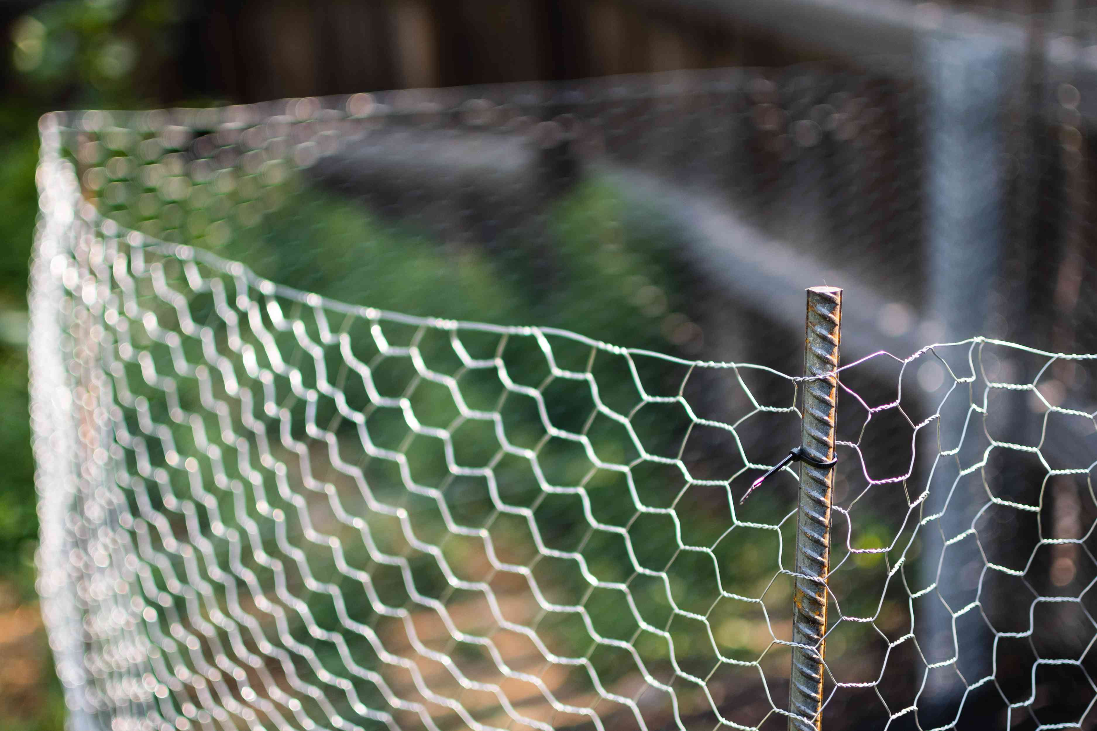 Metal chicken wire wrapped around rebar poles and secured with zip ties