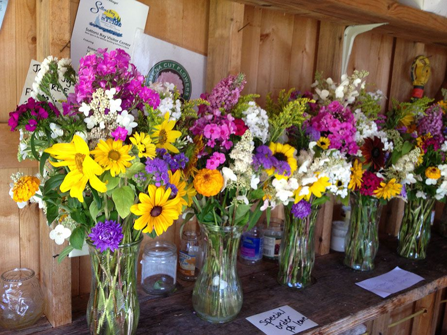 Omena Cut Flowers. Omena Flower Farm