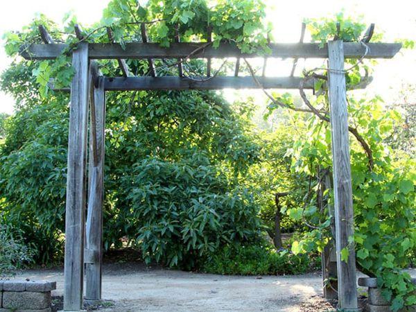 A grape arbor among green trees