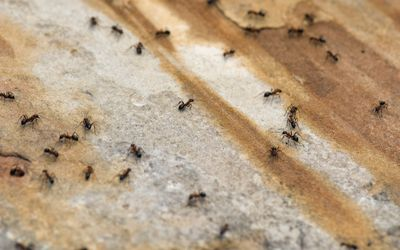 Pest Repellent Buying Guides & Reviews