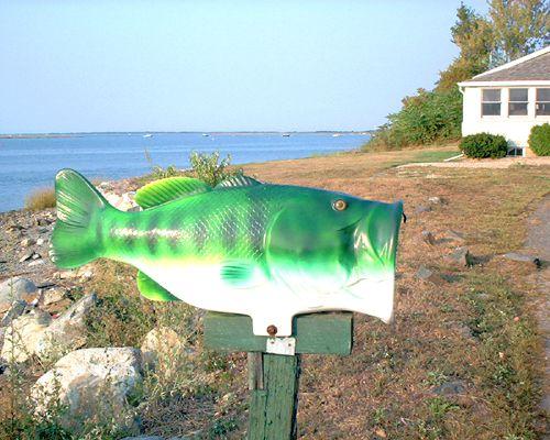 Buzón de peces con vistas al agua