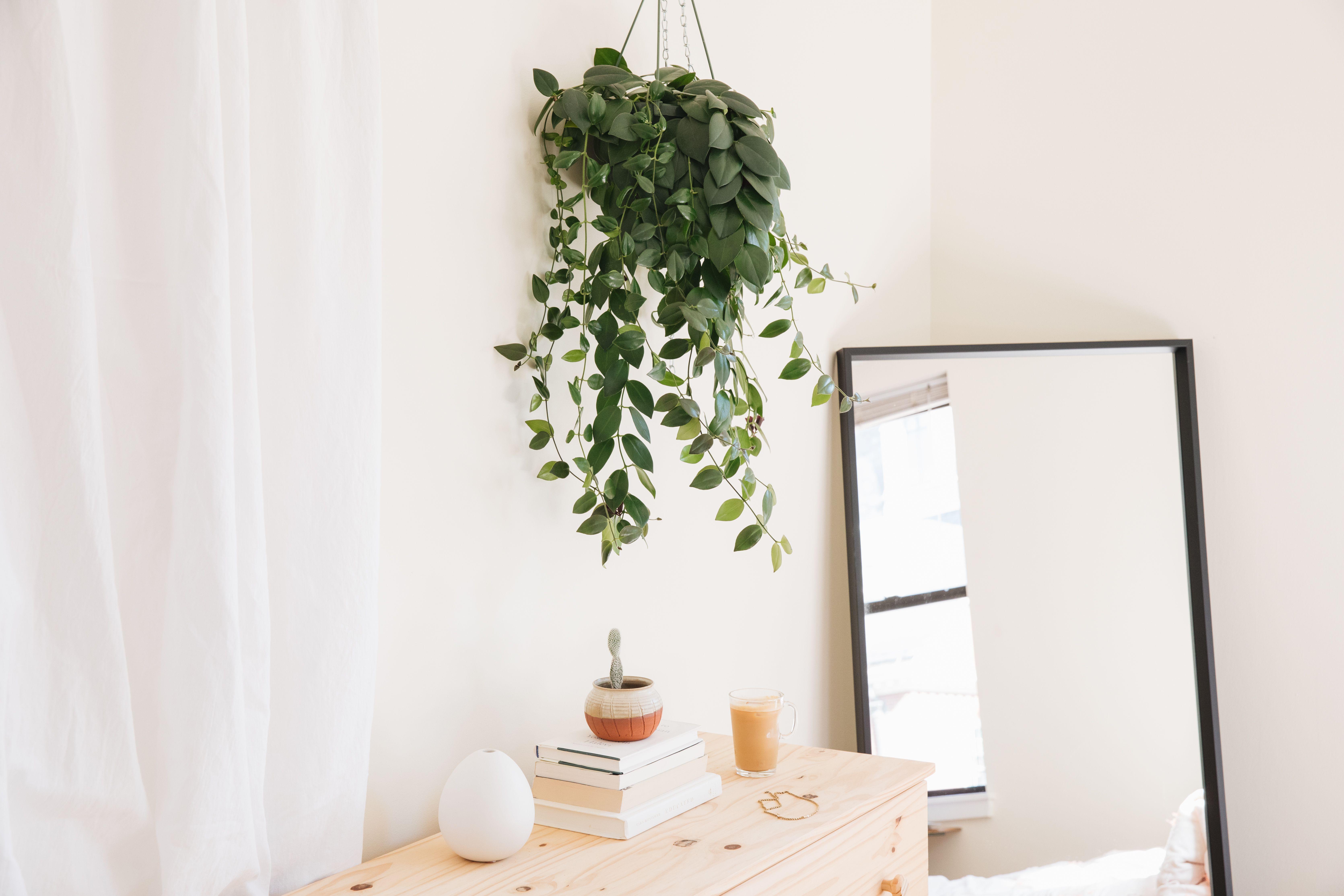 20 Best Houseplants for Hanging Baskets