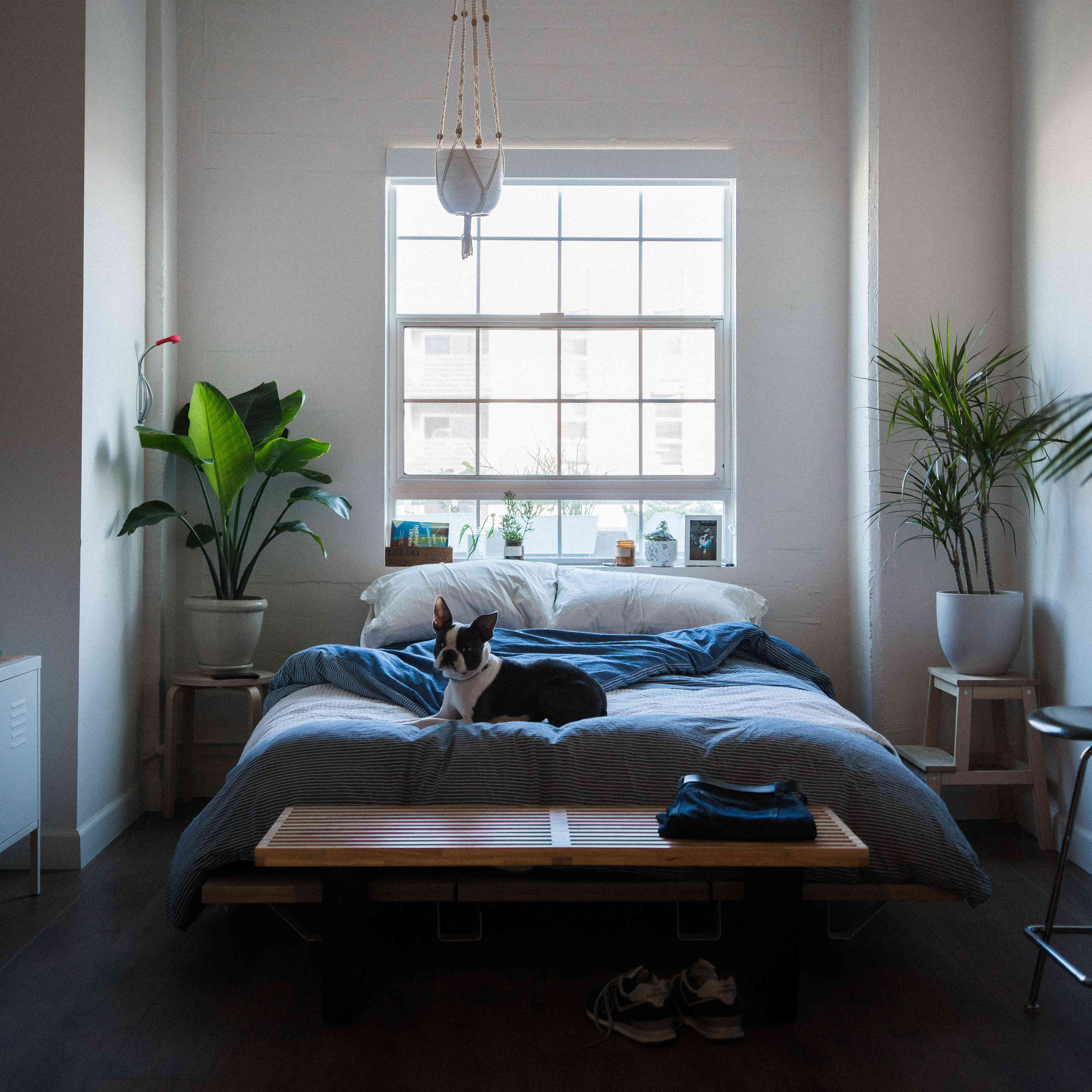 Quiet bedroom with plants, dark floors and blue linens
