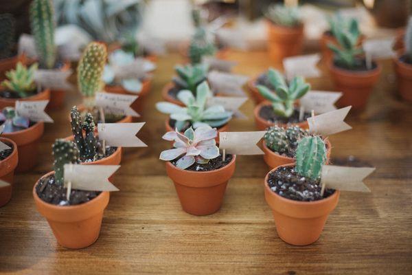mini succulents as party favors