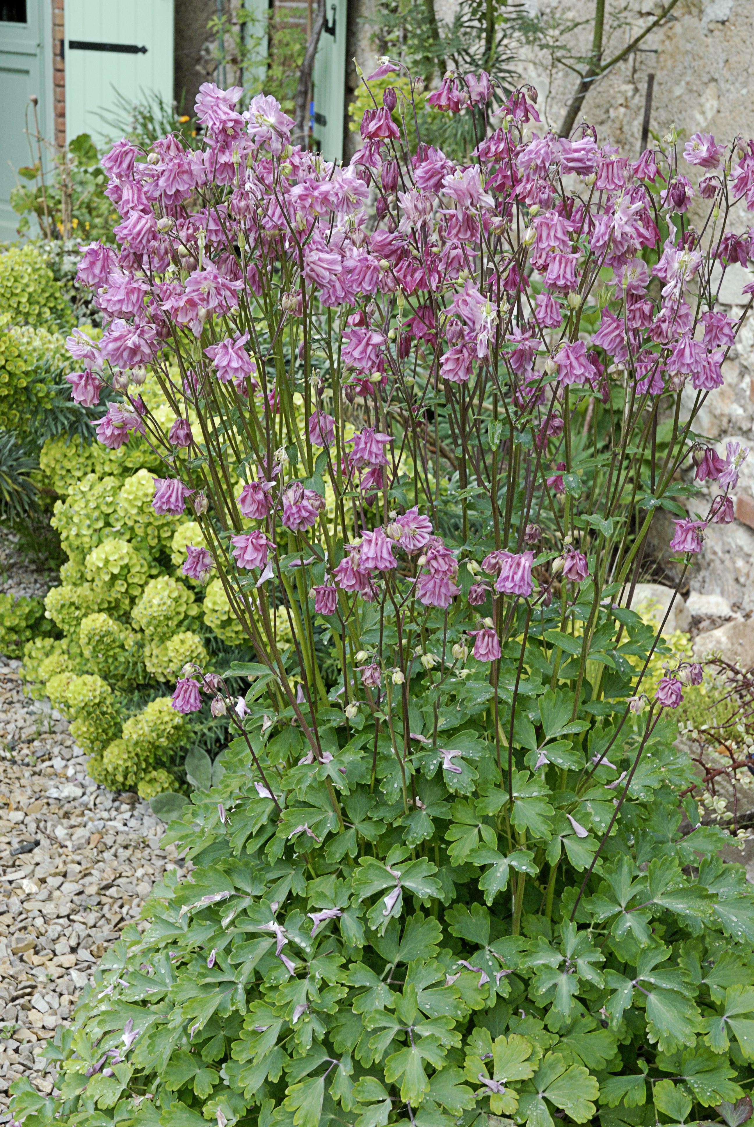 Spring Flower Border Gallery