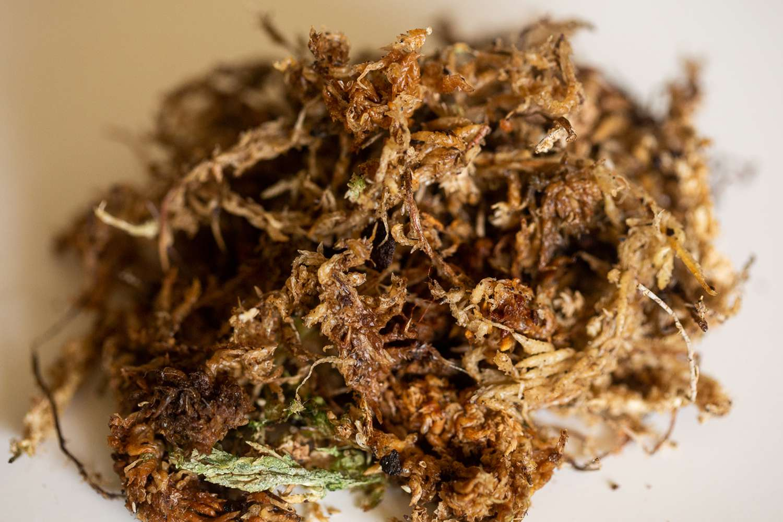 Closeup of sphagnum moss
