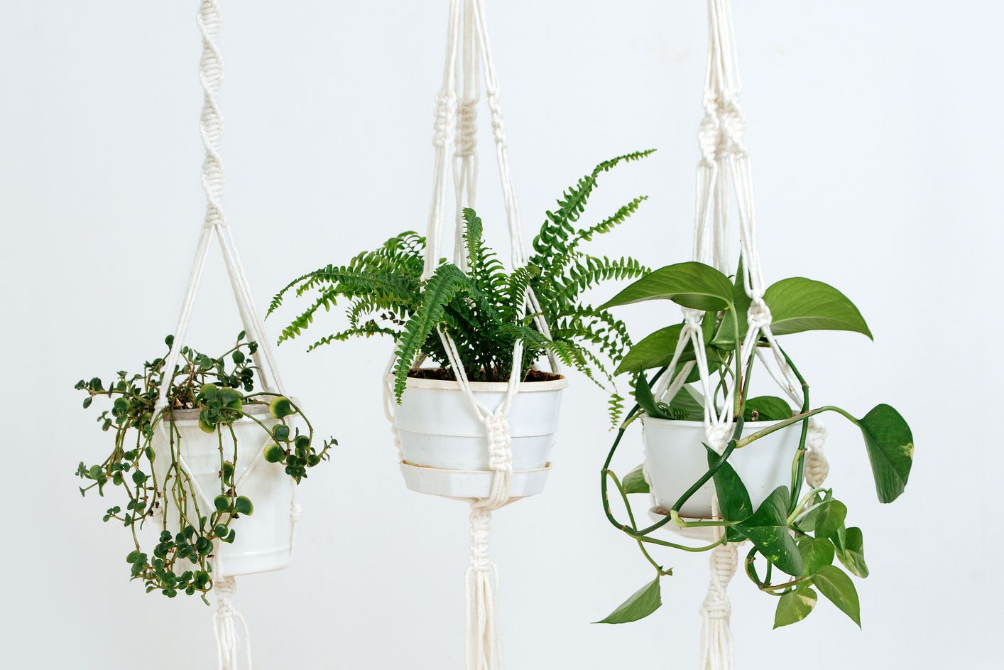 twisted macrame plant hangers