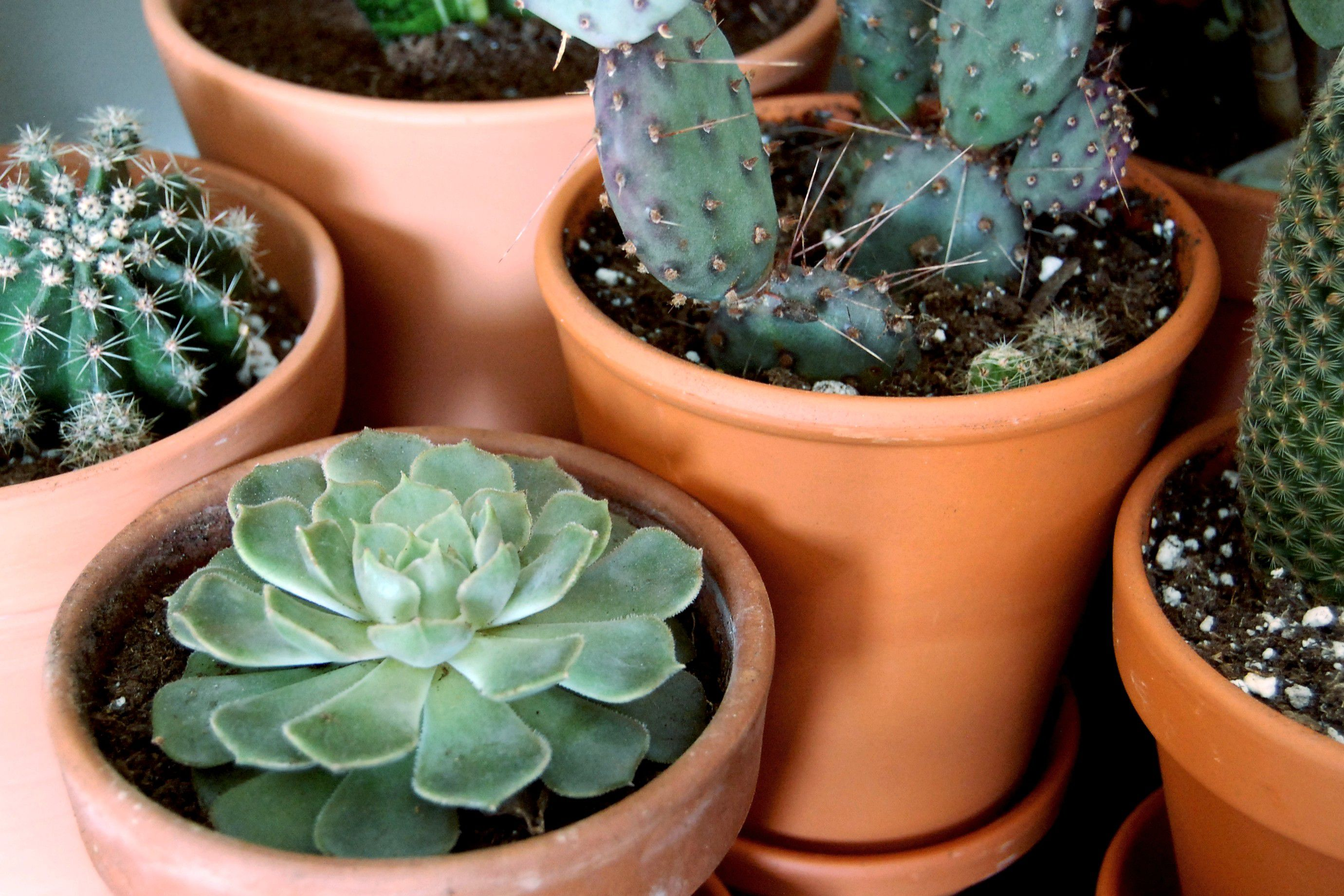 What S The Difference Between Cacti And Succulents