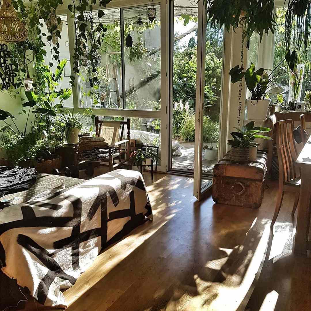 Plant in light filled living room