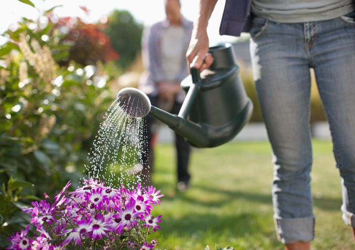 The 8 Best Fertilizers of 2019