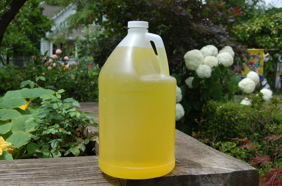 Image of bottle of lemon ammonia, used as a dog repellent (also deters cats and mosquitoes).