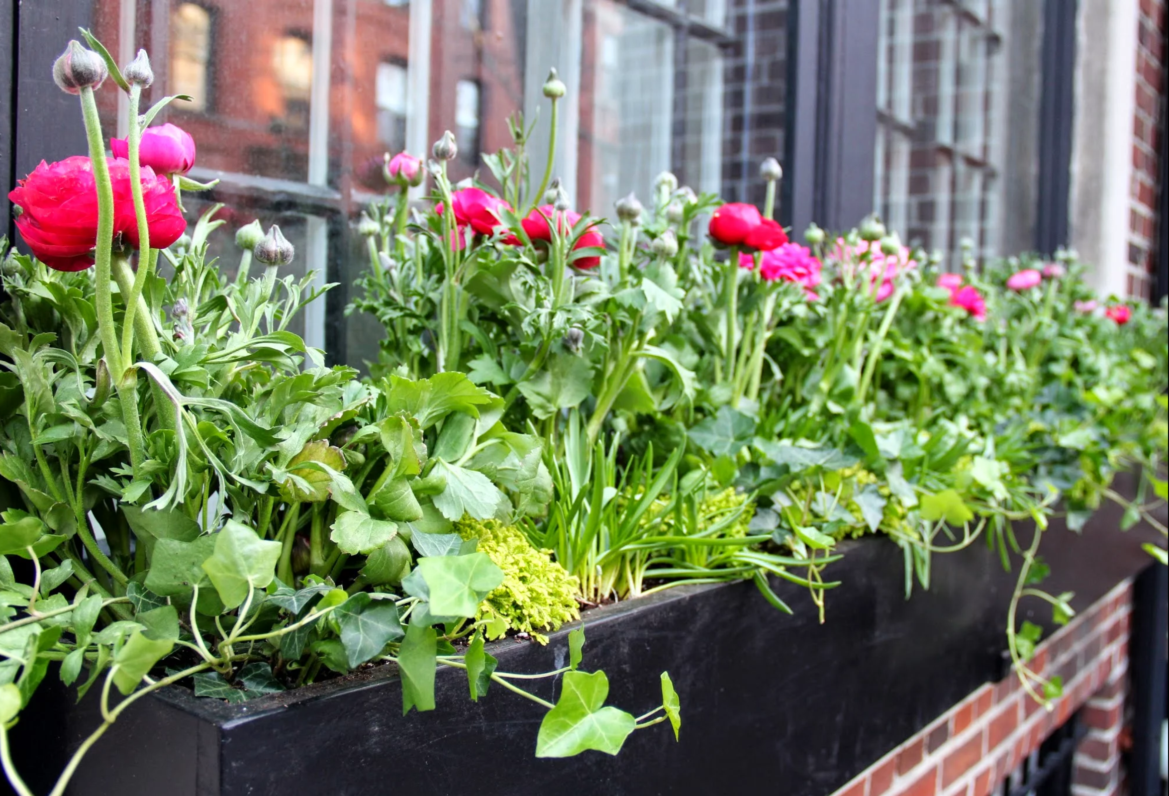 spring window box design