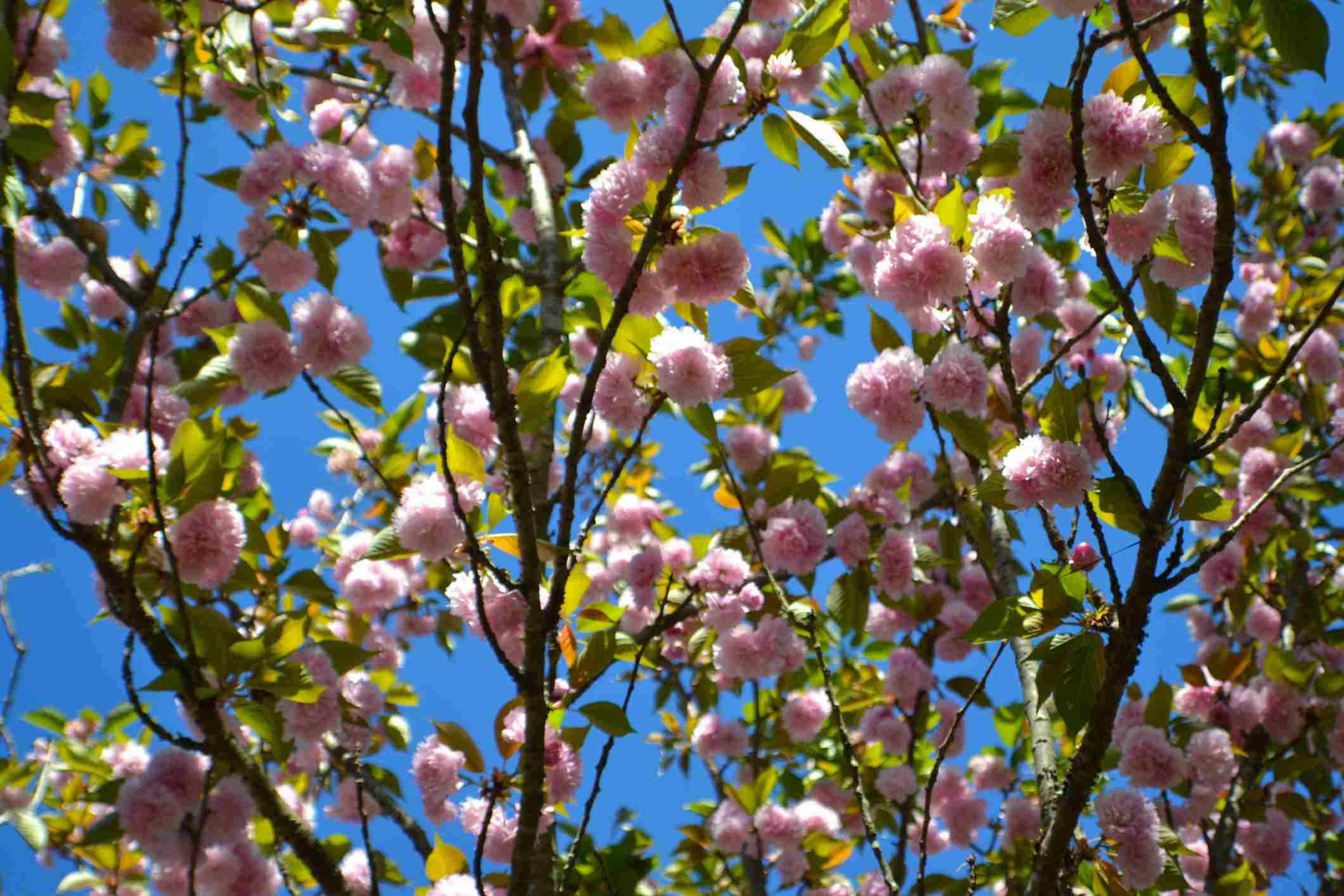 The Best Flowering Trees For Your Landscape