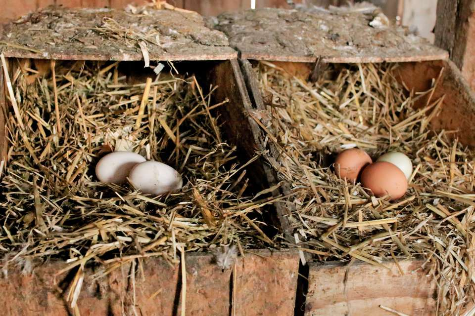 hen boxes with eggs