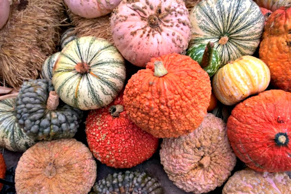 A set of mixed pumpkins