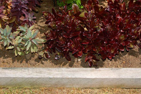 Image: landscape timber edging used to frame a sedum bed.