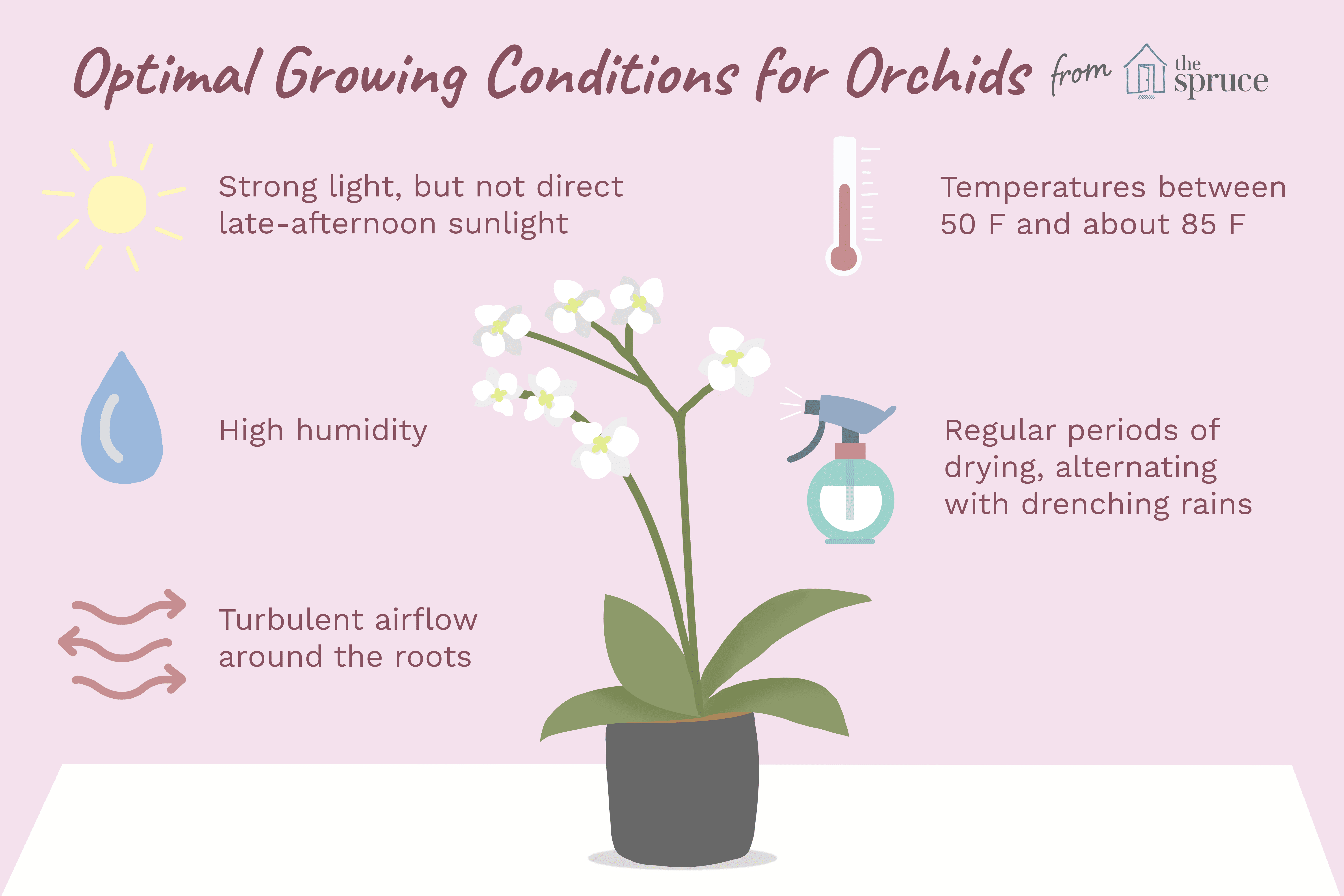 illustration of optimal growing conditions for orchids