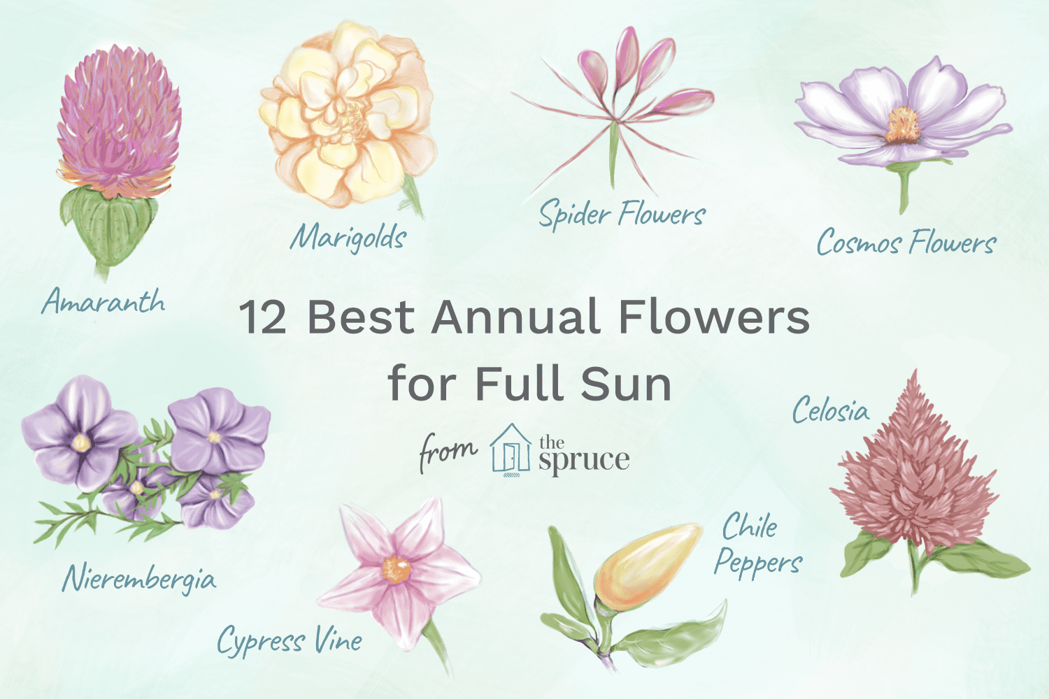 12 Best Annual Flowers For Full Sun