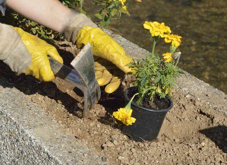improve clay soil in the flower garden