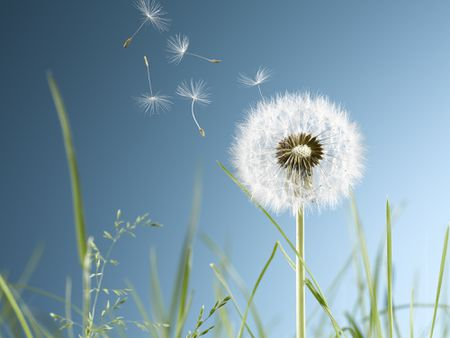 Benefits Of Clover Dandelions And Lawn Weeds