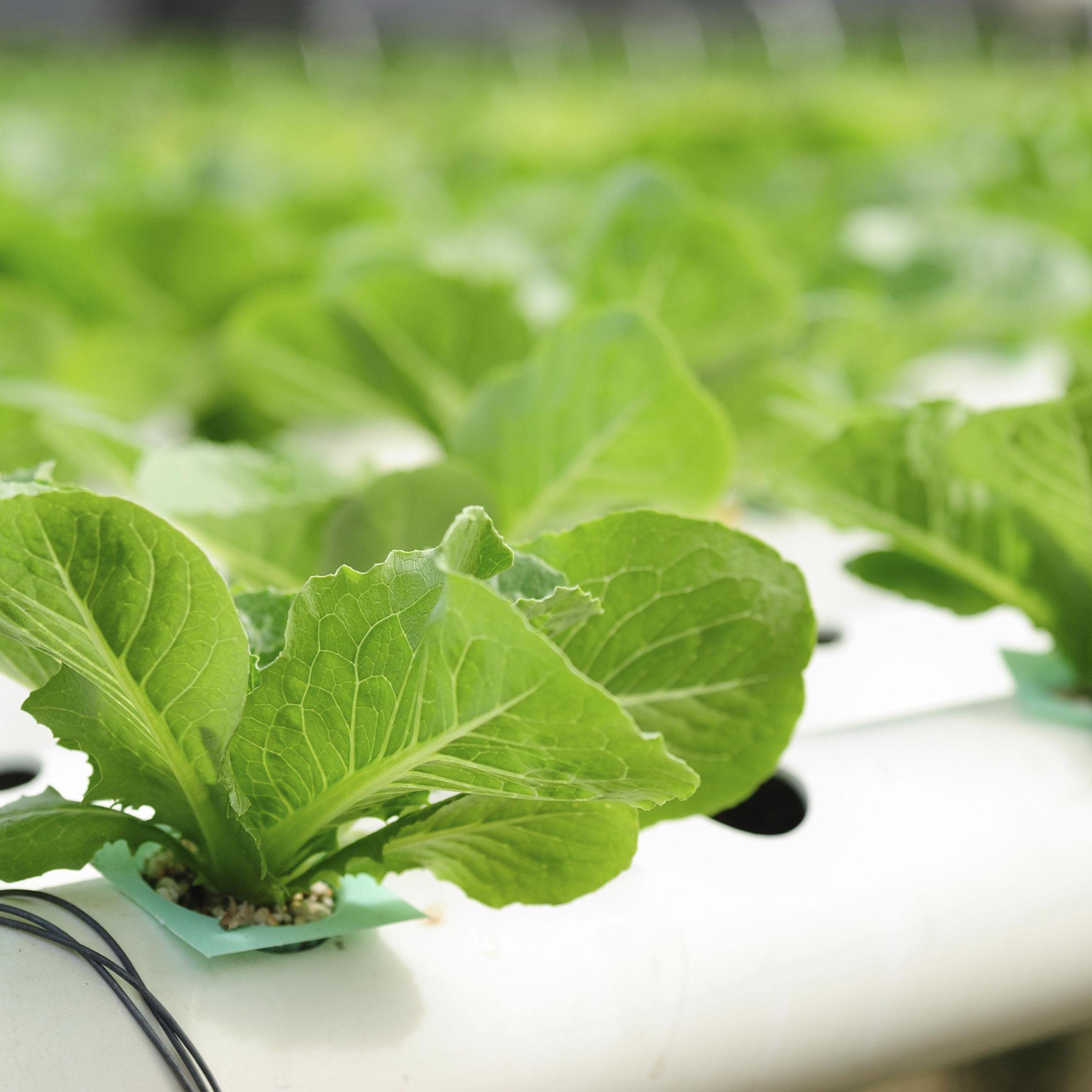 Hydroponic Nutrient Solution Basics