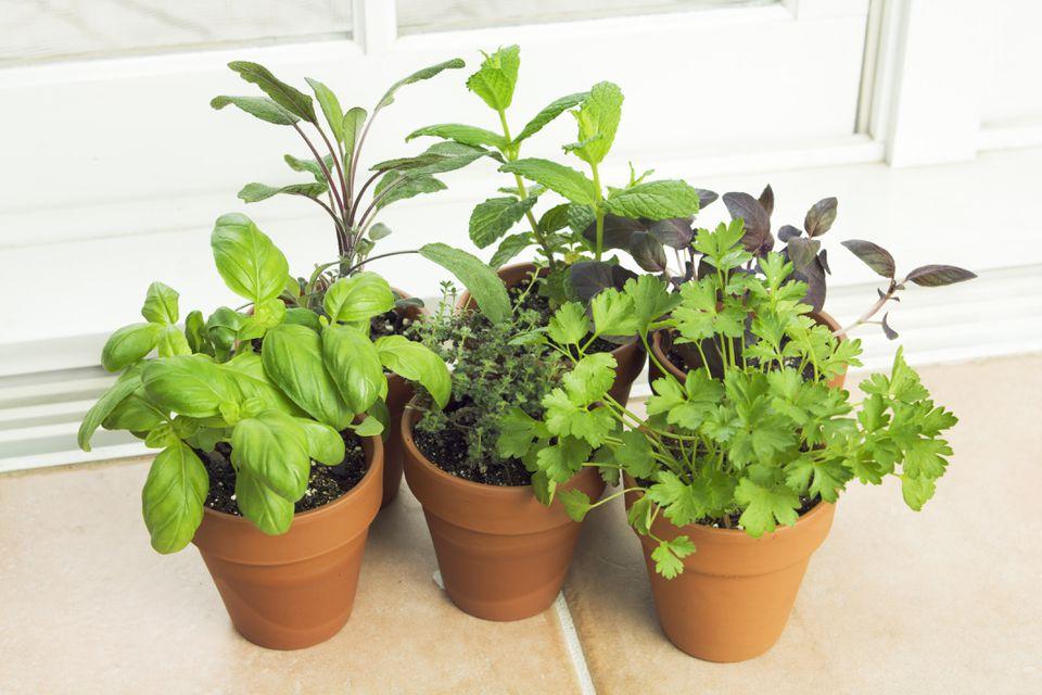 Sunny Herb Garden