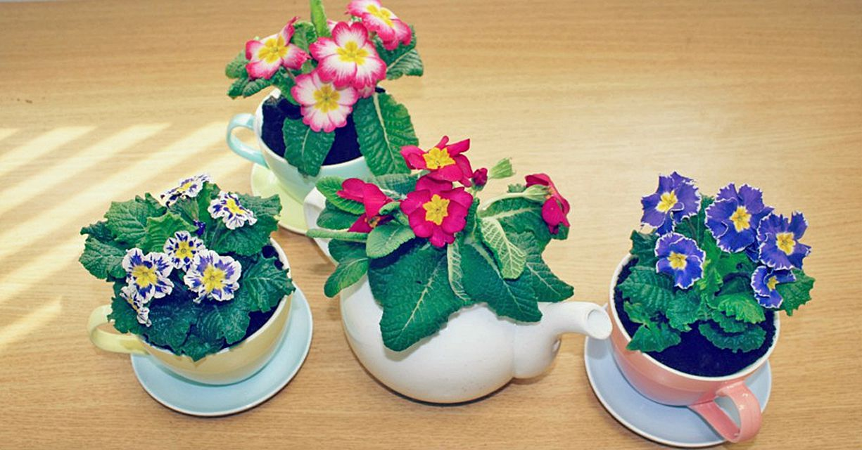 Tea Pot and Cup Planters